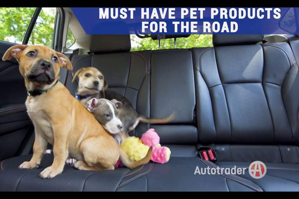 6 Must-Have Car Accessories for Your Pet featured image large thumb1