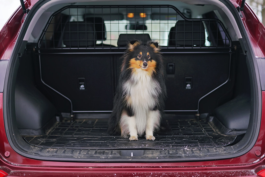 Best Pet Accessories for Your Car: 2019 Edition featured image large thumb0