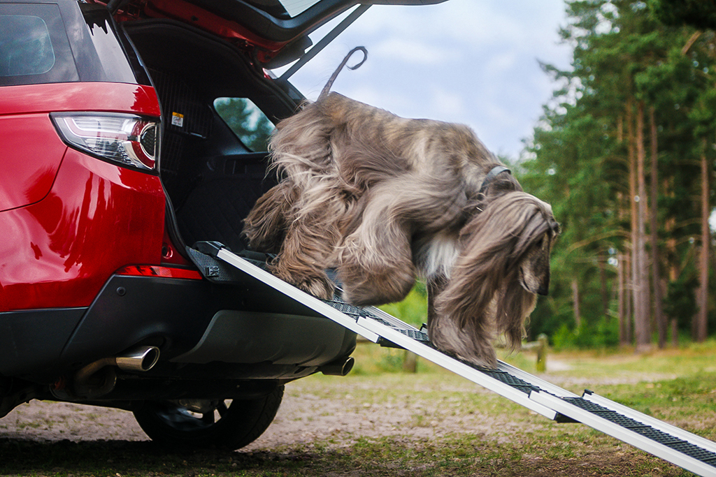 Land Rover Announces New Pet-Friendly Accessories featured image large thumb1